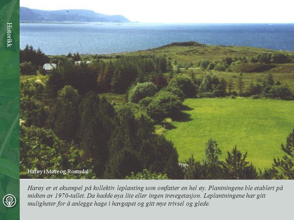 Harøy er et eksempel på kollektiv leplanting som omfatter en hel øy. Plantningene ble etablert på midten av 1970-tallet. Da hadde øya lite eller ingen