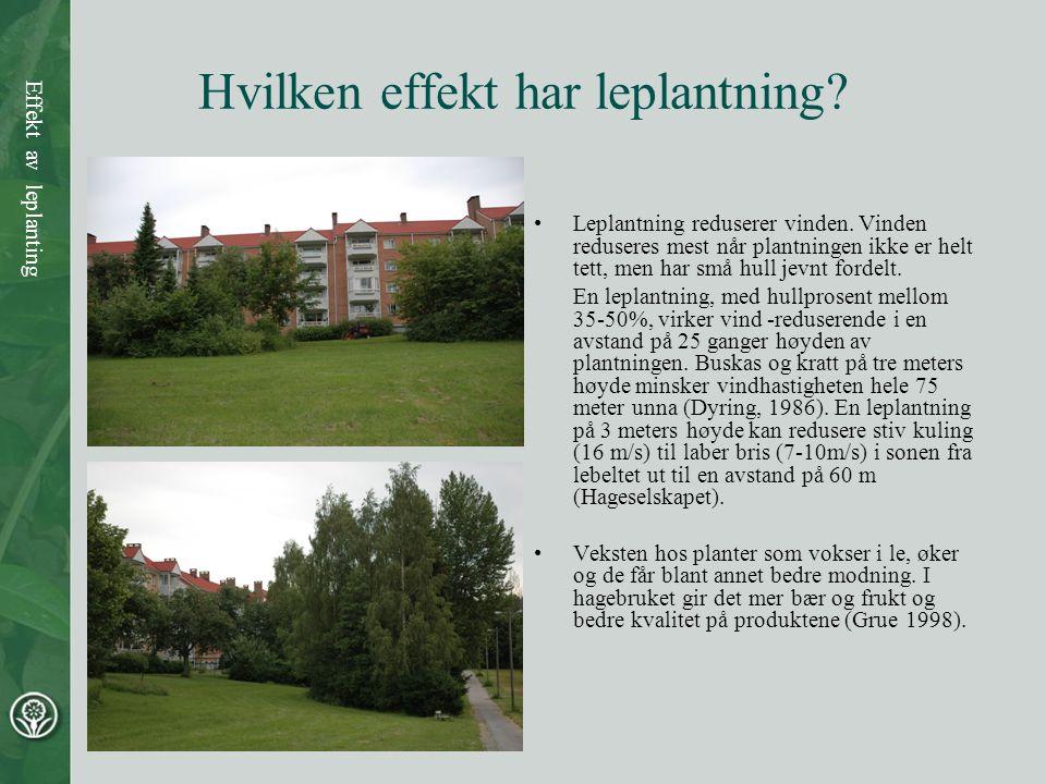 Hvilken effekt har leplantning? •Leplantning reduserer vinden. Vinden reduseres mest når plantningen ikke er helt tett, men har små hull jevnt fordelt