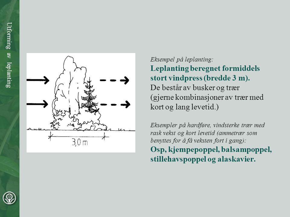 Eksempel på leplanting: Leplanting beregnet formiddels stort vindpress (bredde 3 m). De består av busker og trær (gjerne kombinasjoner av trær med kor
