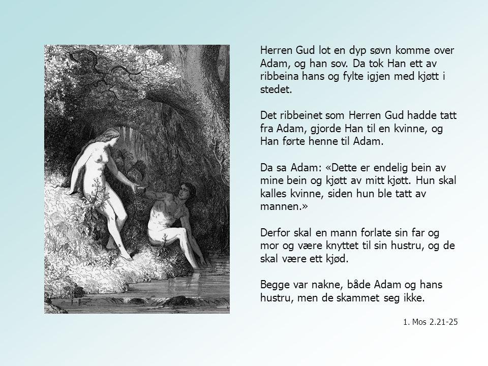 Herren Gud lot en dyp søvn komme over Adam, og han sov. Da tok Han ett av ribbeina hans og fylte igjen med kjøtt i stedet. Det ribbeinet som Herren Gu