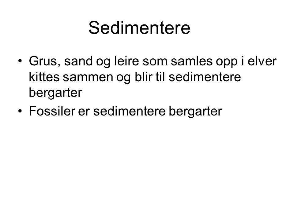 Sedimentere •Grus, sand og leire som samles opp i elver kittes sammen og blir til sedimentere bergarter •Fossiler er sedimentere bergarter