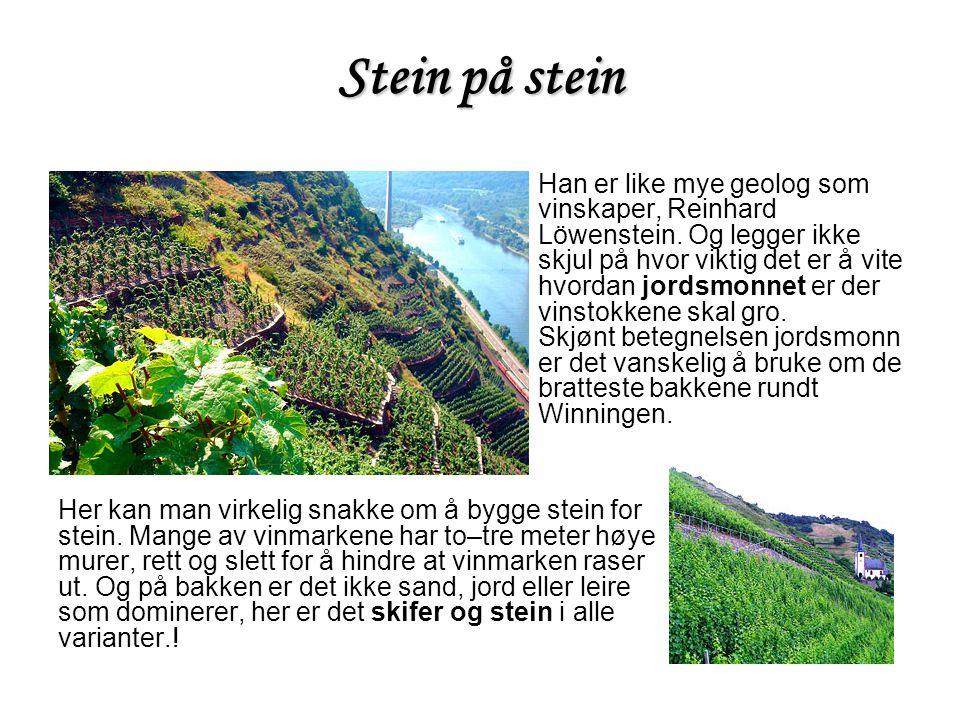 Stein på stein Han er like mye geolog som vinskaper, Reinhard Löwenstein. Og legger ikke skjul på hvor viktig det er å vite hvordan jordsmonnet er der