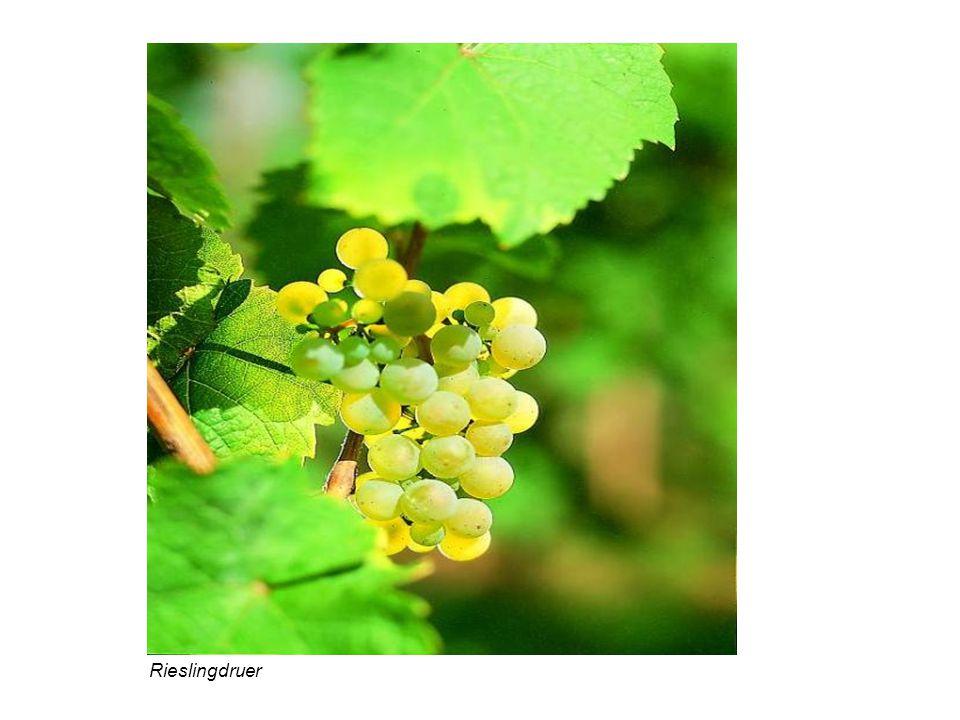 Tysk vin er delt opp i 4 klassifikasjoner: 1.Deutscher Tafelwein 2.