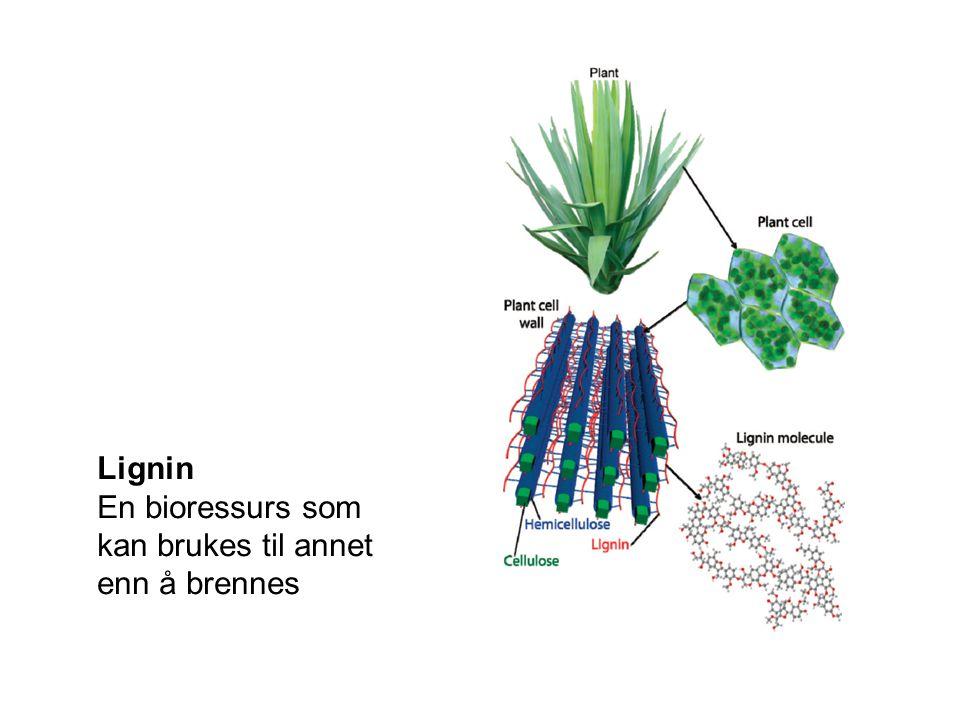 Lignin En bioressurs som kan brukes til annet enn å brennes