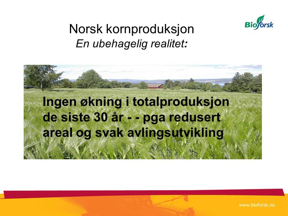 Norsk kornproduksjon En ubehagelig realitet: •Redusere utslipp av klimagasser •EU´s vanndirektiv •Trygg mat •Nasjonale produksjonsmål Ingen økning i t