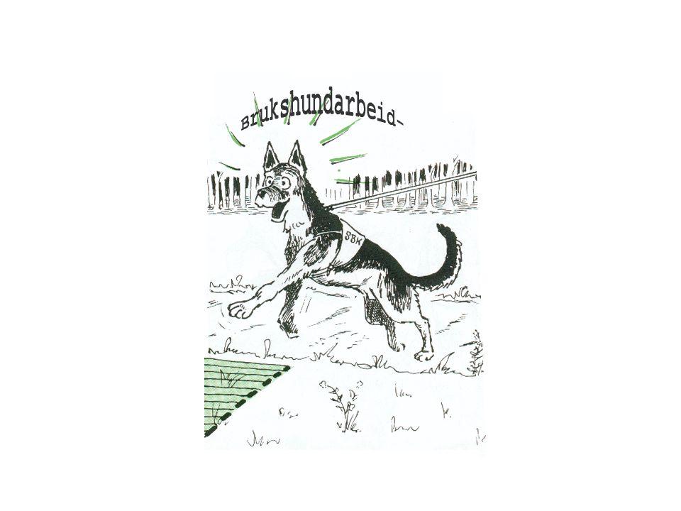 Brukshund – hva er det.