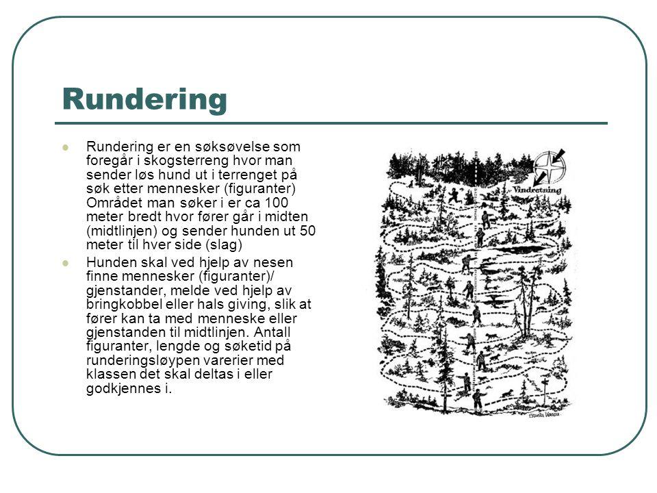 Rundering  Rundering er en søksøvelse som foregår i skogsterreng hvor man sender løs hund ut i terrenget på søk etter mennesker (figuranter) Området