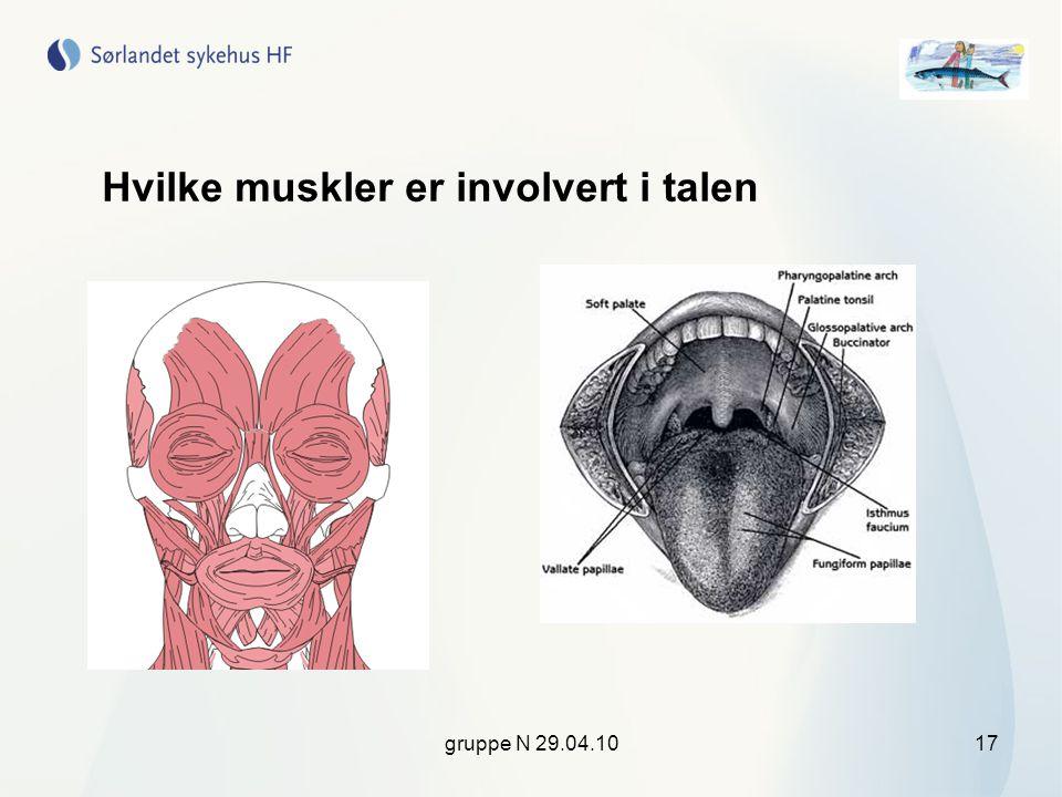gruppe N 29.04.1017 Hvilke muskler er involvert i talen