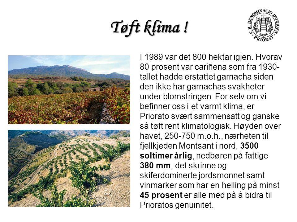 Tøft klima ! I 1989 var det 800 hektar igjen. Hvorav 80 prosent var cariñena som fra 1930- tallet hadde erstattet garnacha siden den ikke har garnacha