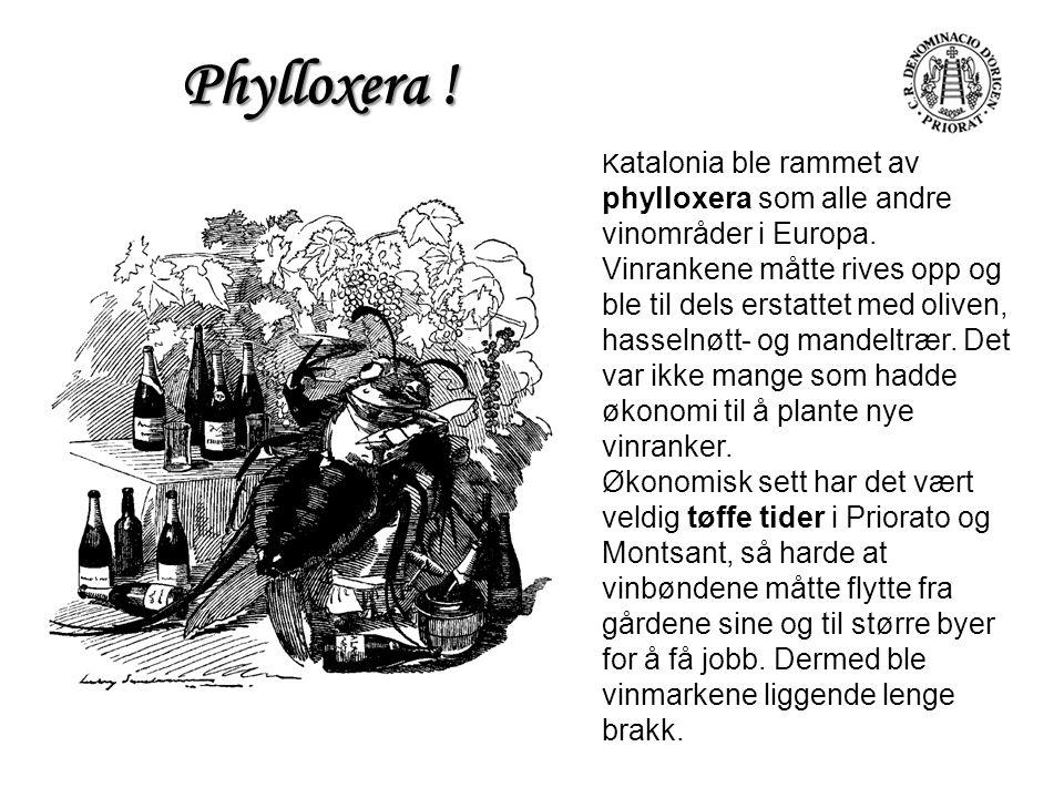 K atalonia ble rammet av phylloxera som alle andre vinområder i Europa. Vinrankene måtte rives opp og ble til dels erstattet med oliven, hasselnøtt- o