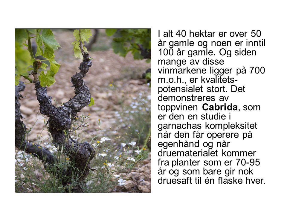 I alt 40 hektar er over 50 år gamle og noen er inntil 100 år gamle. Og siden mange av disse vinmarkene ligger på 700 m.o.h., er kvalitets- potensialet