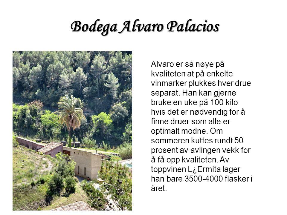 Bodega Alvaro Palacios Alvaro er så nøye på kvaliteten at på enkelte vinmarker plukkes hver drue separat. Han kan gjerne bruke en uke på 100 kilo hvis