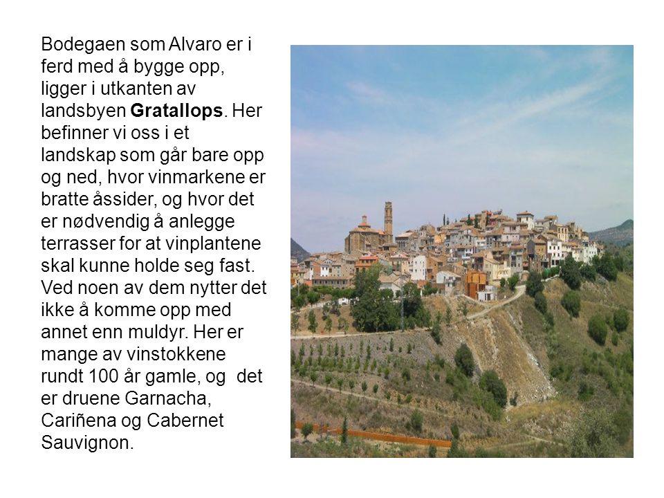 Bodegaen som Alvaro er i ferd med å bygge opp, ligger i utkanten av landsbyen Gratallops. Her befinner vi oss i et landskap som går bare opp og ned, h