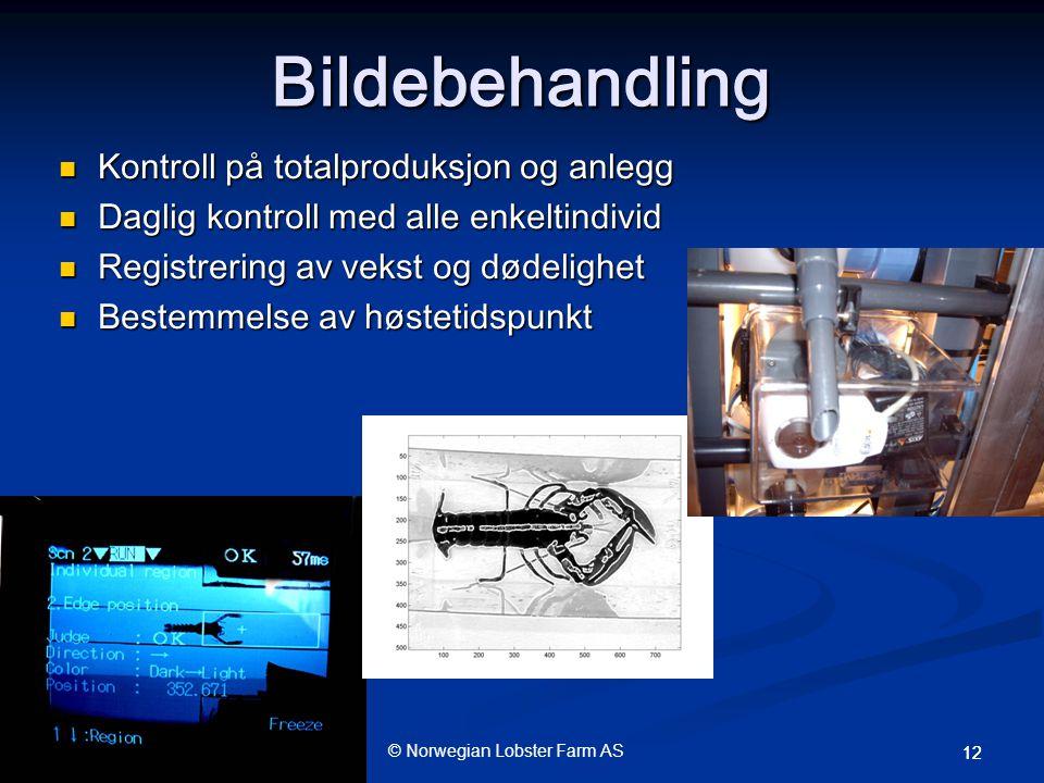 © Norwegian Lobster Farm AS 12 Bildebehandling  Kontroll på totalproduksjon og anlegg  Daglig kontroll med alle enkeltindivid  Registrering av vekst og dødelighet  Bestemmelse av høstetidspunkt
