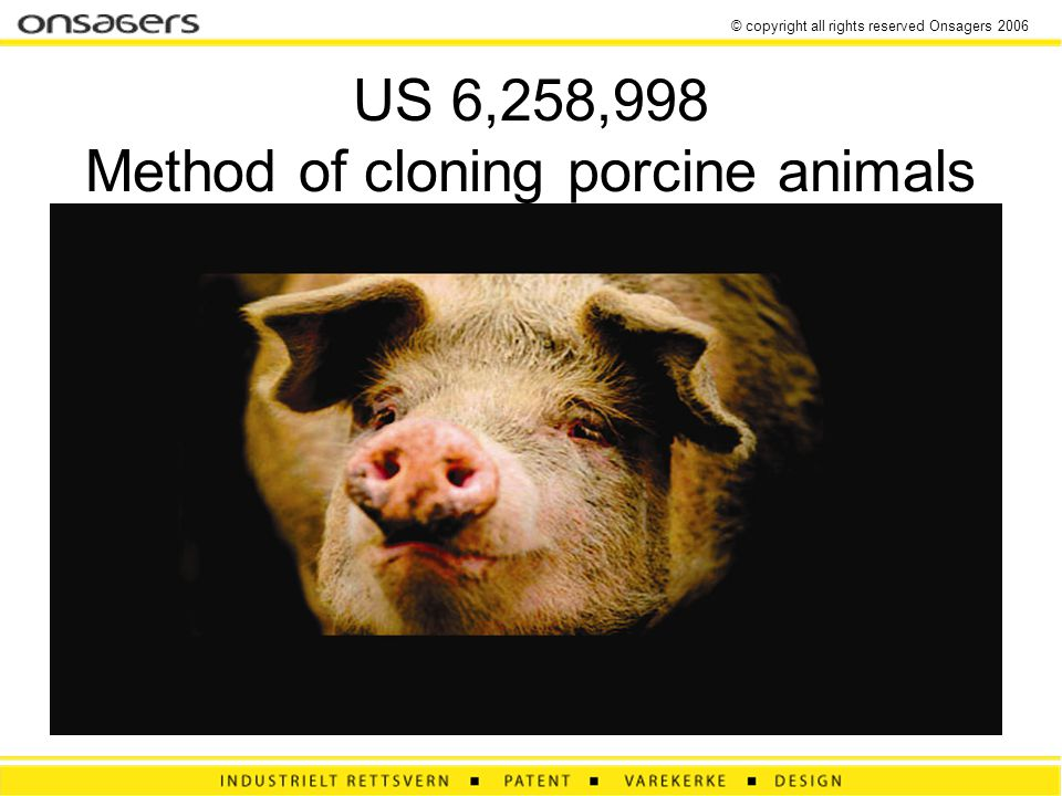 © copyright all rights reserved Onsagers 2006 US 6,258,998 Method of cloning porcine animals