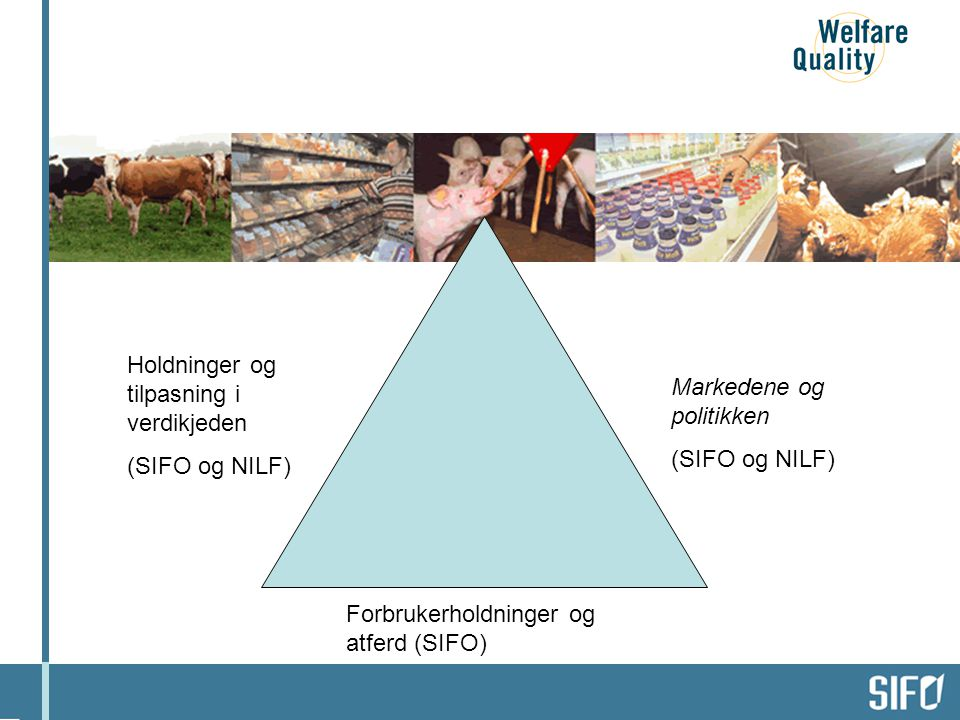 Holdninger og tilpasning i verdikjeden (SIFO og NILF) Forbrukerholdninger og atferd (SIFO) Markedene og politikken (SIFO og NILF) Dyrevelferd i produksjonen (UMB og NILF)