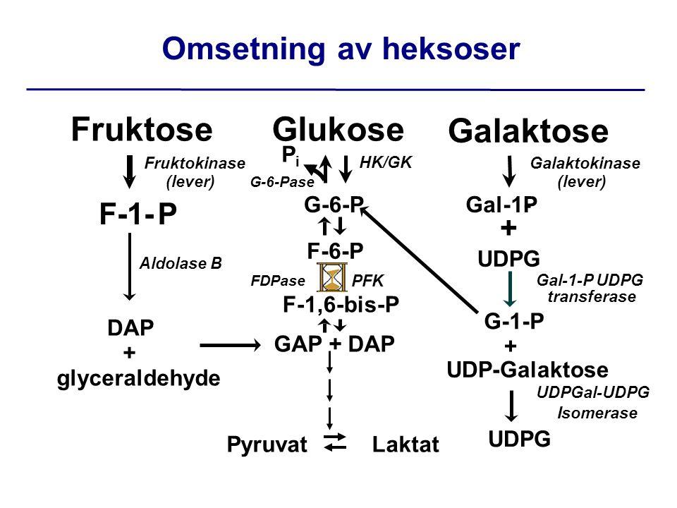 Glukose G-6-P F-6-P GAP + DAP Fruktose F-1-P DAP + glyceraldehyde Galaktose Gal-1-P UDPG G-1-P + UDP-Galaktose F-1,6-bis-P Fruktokinase (lever) HK/GK