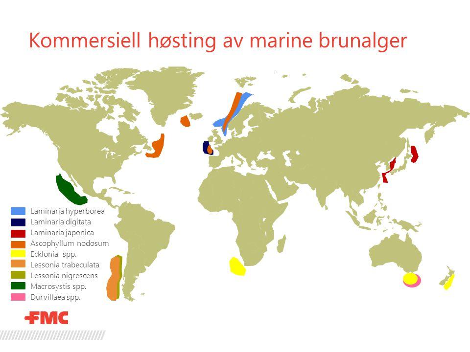 Kommersiell høsting av marine brunalger Laminaria hyperborea Laminaria digitata Laminaria japonica Ascophyllum nodosum Ecklonia spp. Lessonia trabecul