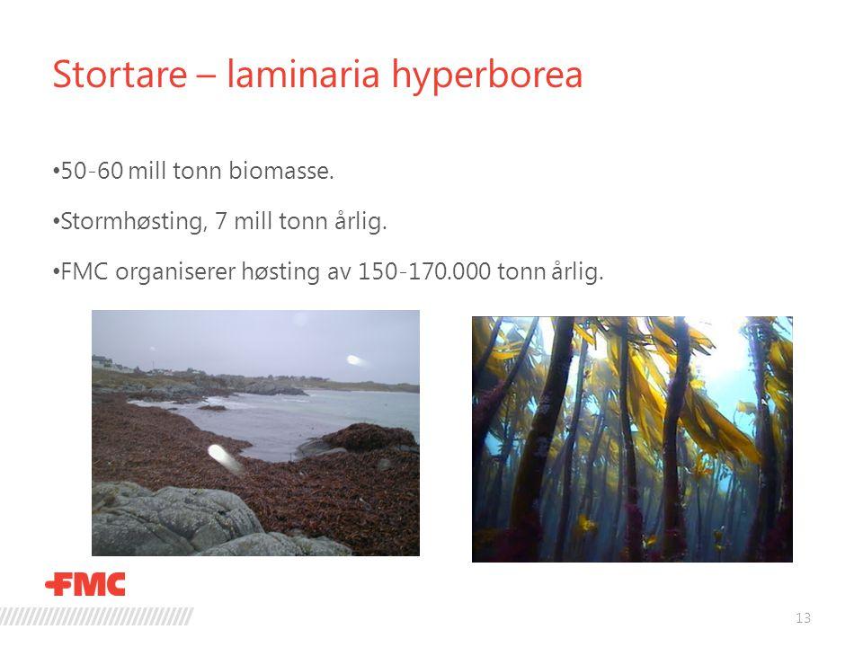 Stortare – laminaria hyperborea 13 • 50-60 mill tonn biomasse. • Stormhøsting, 7 mill tonn årlig. • FMC organiserer høsting av 150-170.000 tonn årlig.
