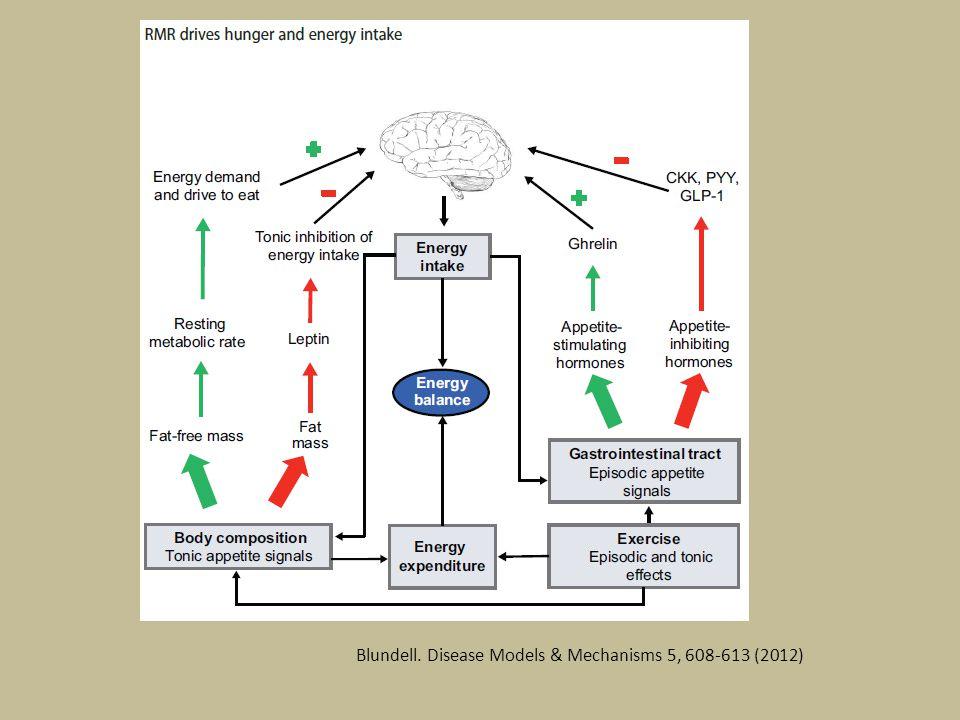 Blundell. Disease Models & Mechanisms 5, 608-613 (2012)