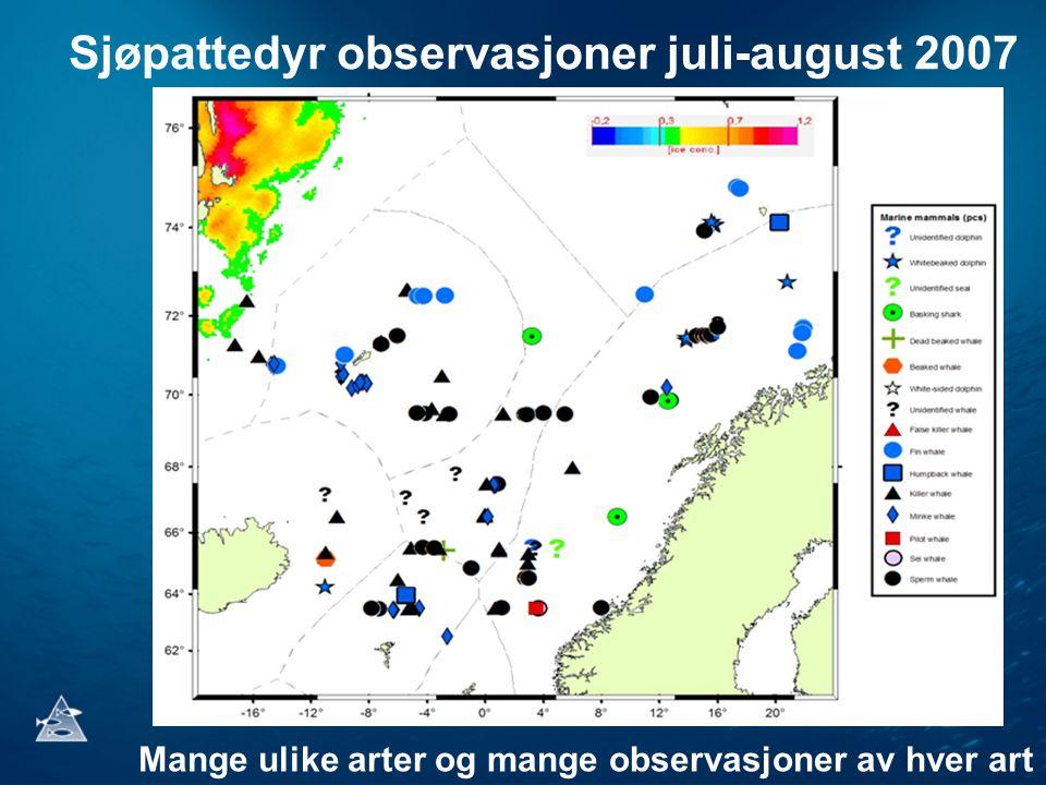 Sjøpattedyr observasjoner juli-august 2007 Mange ulike arter og mange observasjoner av hver art