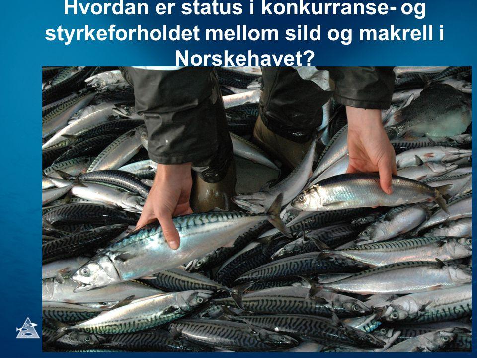 Hvordan er status i konkurranse- og styrkeforholdet mellom sild og makrell i Norskehavet?