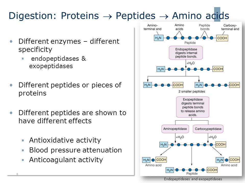 Digestion: Proteins  Peptides  Amino acids •Different enzymes – different specificity  endopeptidases & exopeptidases •Different peptides or pieces of proteins •Different peptides are shown to have different effects  Antioxidative activity  Blood pressure attenuation  Anticoagulant activity •Different enzymes – different specificity  endopeptidases & exopeptidases •Different peptides or pieces of proteins •Different peptides are shown to have different effects  Antioxidative activity  Blood pressure attenuation  Anticoagulant activity Endopeptidases and exopeptidases 8