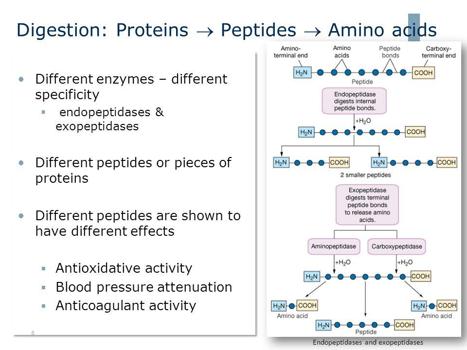 Blodtrykksreduserende aktivitet •Høyt blodtrykk er en stor og uavhengig risikofaktor for hjerte- og karsykdommer •Peptider fra marine organismer kan påvirke enkelte systemer som kontrollerer/regulerer blodtrykket  Inhiberer aktiviteten til angiotensinkonverterende enzym (ACE) •Relativt mange in vitro studier på sjømatproteiner, men også noen dyre studier •Korte peptidkjeder har best effekt, gjerne med Trp eller Pro i c- terminus •Få eller ingen bieffekter, men syntetiske ACE-hemmere kan gi bieffekter •Peptidene har liten effekt eller ingen effekt på normotensive individer 9