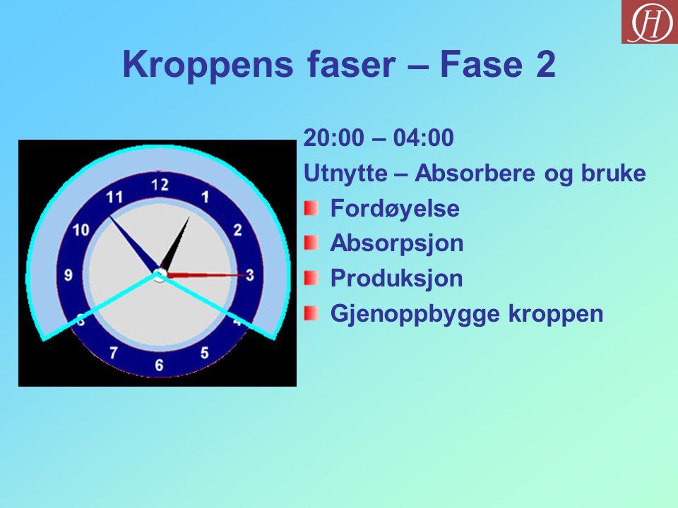 Kroppens faser – Fase 2 20:00 – 04:00 Utnytte – Absorbere og bruke Fordøyelse Absorpsjon Produksjon Gjenoppbygge kroppen