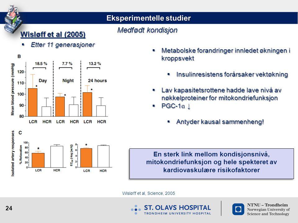 24 Wisløff et al, Science, 2005 Wisløff et al (2005)  Metabolske forandringer innledet økningen i kroppsvekt  Insulinresistens forårsaker vektøkning