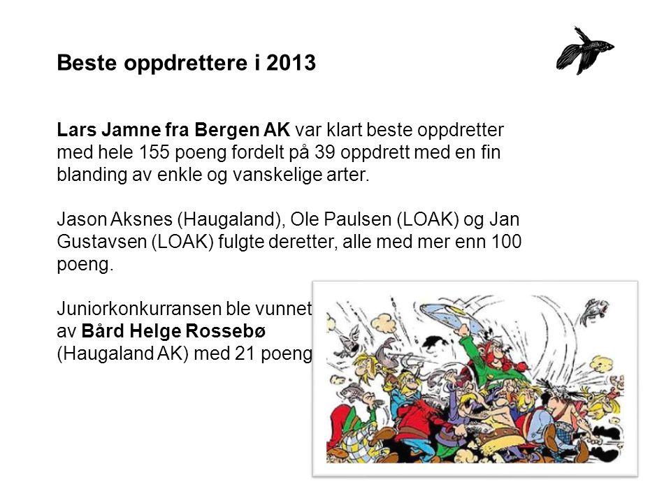 Beste oppdrettere i 2013 Lars Jamne fra Bergen AK var klart beste oppdretter med hele 155 poeng fordelt på 39 oppdrett med en fin blanding av enkle og vanskelige arter.