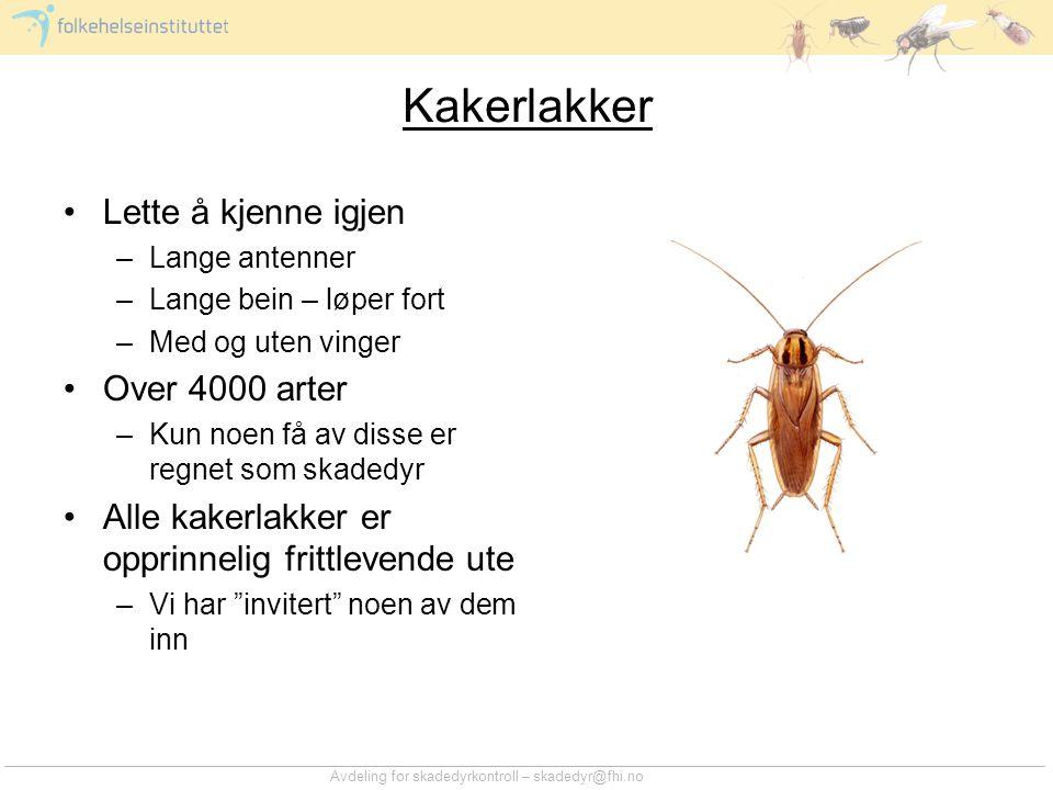 Avdeling for skadedyrkontroll – skadedyr@fhi.no Kakerlakker •Lette å kjenne igjen –Lange antenner –Lange bein – løper fort –Med og uten vinger •Over 4