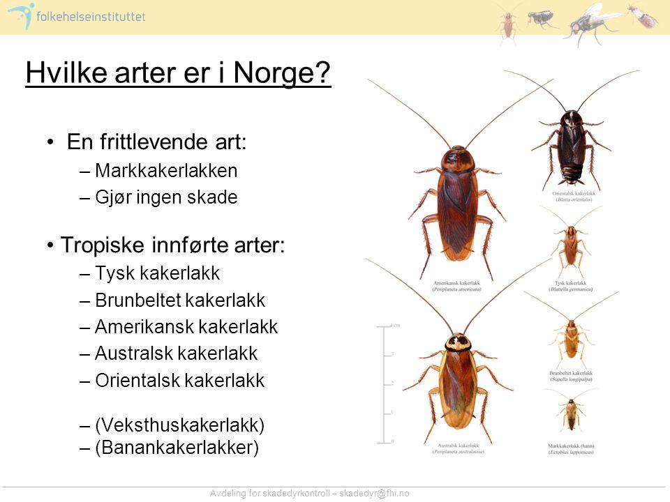 Avdeling for skadedyrkontroll – skadedyr@fhi.no Kakerlakker som smittespredere •Kakerlakker kan være vektorer –Overfører sykdom fra vert til vert eller fra et område til et annet •Overføringen kan være mekanisk –Forurensning av sykdomsfremkallende organismer på vektoren •Overføringen kan være biologisk –De sykdomsfremkallende organismene opptas i vektoren hvor de kan overleve, eventuelt formere seg eller gjennomgå en utvikling til et stadium som kan smitte neste vert •De sykdomsfremkallende organismene kan være virus, bakterier, sopp og parasitter