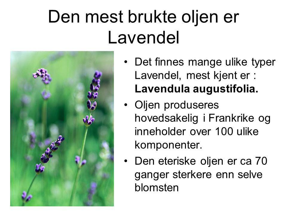 Den mest brukte oljen er Lavendel •Det finnes mange ulike typer Lavendel, mest kjent er : Lavendula augustifolia.