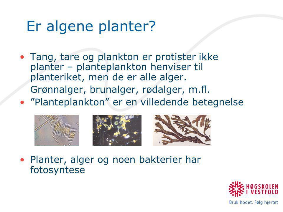 Er algene planter.