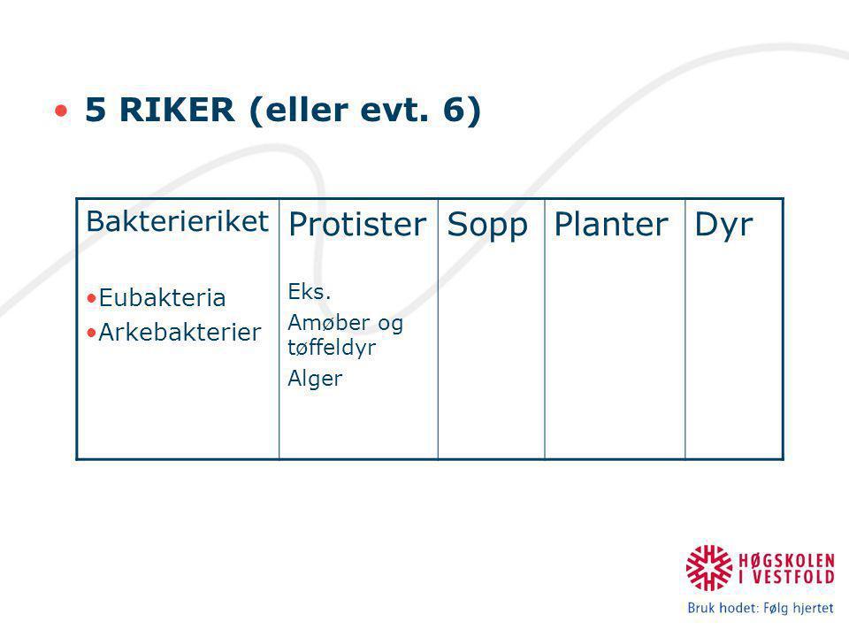 •5 RIKER (eller evt.6) Bakterieriket •Eubakteria •Arkebakterier Protister Eks.
