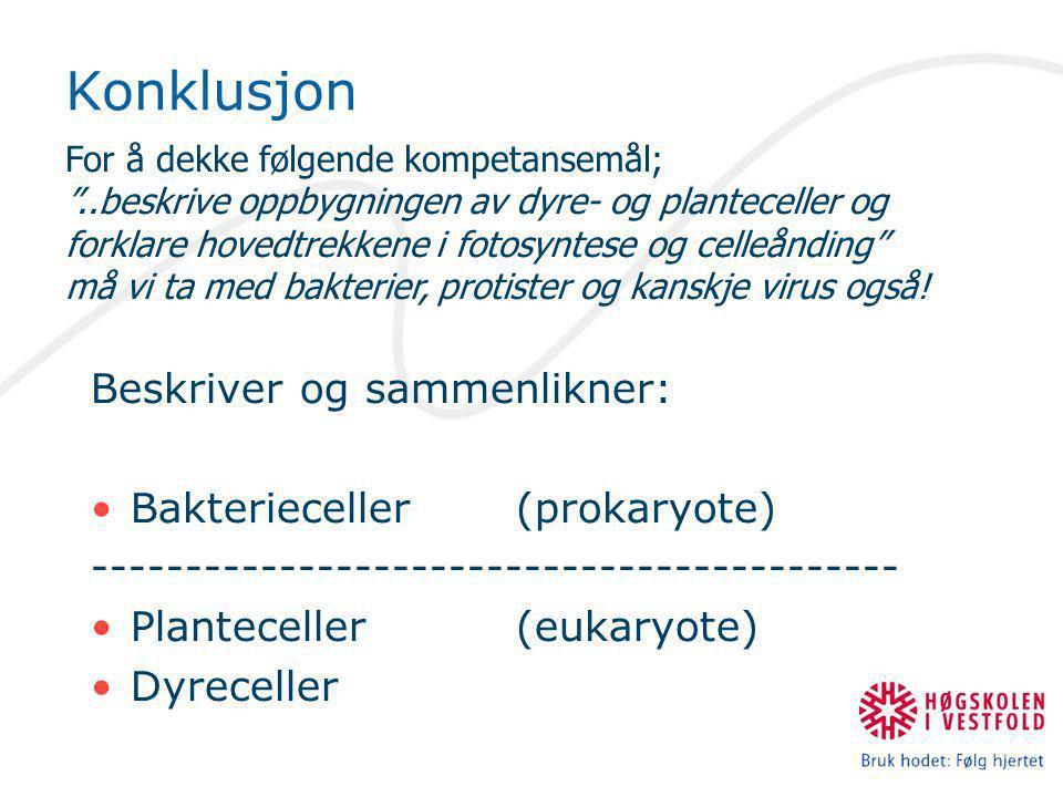 Beskriver og sammenlikner: •Bakterieceller (prokaryote) ------------------------------------------- •Planteceller (eukaryote) •Dyreceller For å dekke følgende kompetansemål; ..beskrive oppbygningen av dyre- og planteceller og forklare hovedtrekkene i fotosyntese og celleånding må vi ta med bakterier, protister og kanskje virus også.