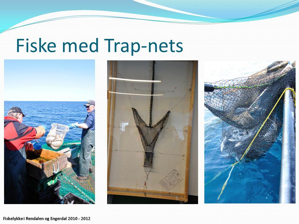 Fiske med Trap-nets