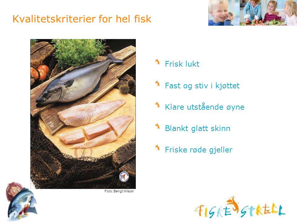 Kvalitetskriterier for hel fisk Frisk lukt Fast og stiv i kjøttet Klare utstående øyne Blankt glatt skinn Friske røde gjeller Foto: Bengt Wilson