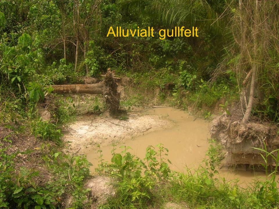 Alluvialt gullfelt