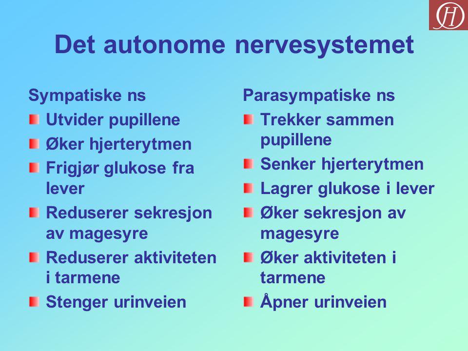 Det autonome nervesystemet Sympatiske ns Utvider pupillene Øker hjerterytmen Frigjør glukose fra lever Reduserer sekresjon av magesyre Reduserer aktiv