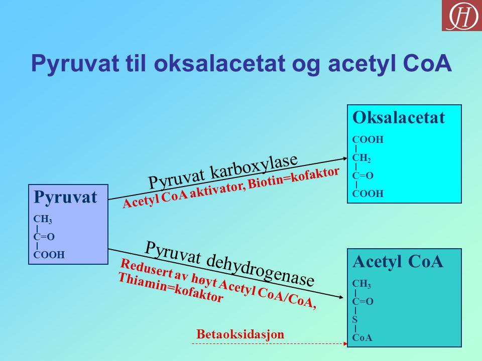 Pyruvat til oksalacetat og acetyl CoA Pyruvat CH 3 C=O COOH Pyruvat karboxylase Pyruvat dehydrogenase Oksalacetat COOH CH 2 C=O COOH Acetyl CoA CH 3 C