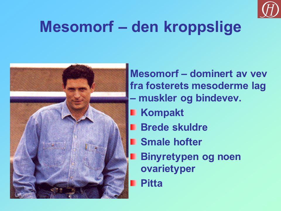 Mesomorf – den kroppslige Mesomorf – dominert av vev fra fosterets mesoderme lag – muskler og bindevev. Kompakt Brede skuldre Smale hofter Binyretypen