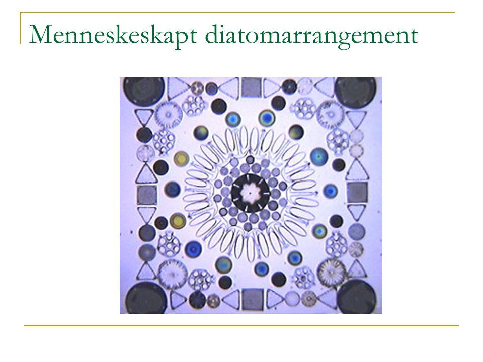 Menneskeskapt diatomarrangement