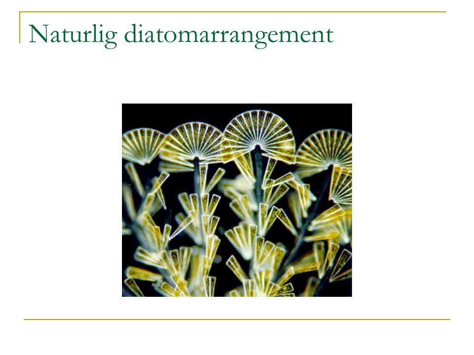 Naturlig diatomarrangement