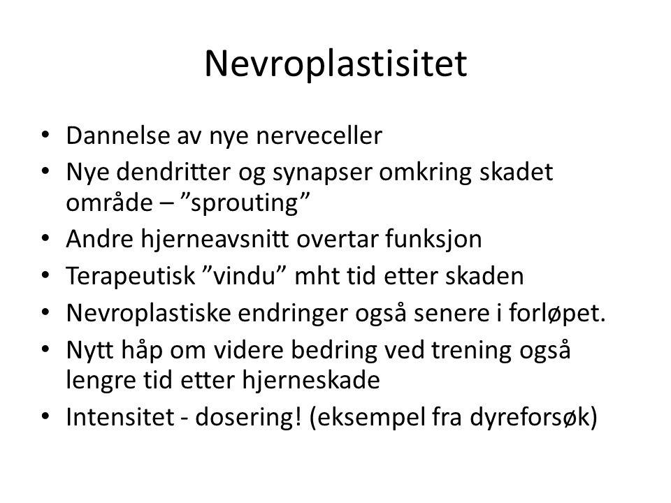 """Nevroplastisitet • Dannelse av nye nerveceller • Nye dendritter og synapser omkring skadet område – """"sprouting"""" • Andre hjerneavsnitt overtar funksjon"""