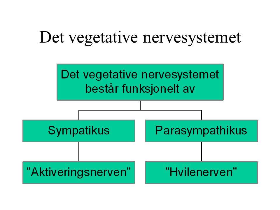 Det vegetative nervesystemet
