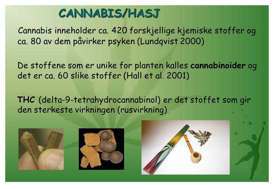 CANNABIS/HASJ Cannabis inneholder ca. 420 forskjellige kjemiske stoffer og ca. 80 av dem påvirker psyken (Lundqvist 2000) De stoffene som er unike for