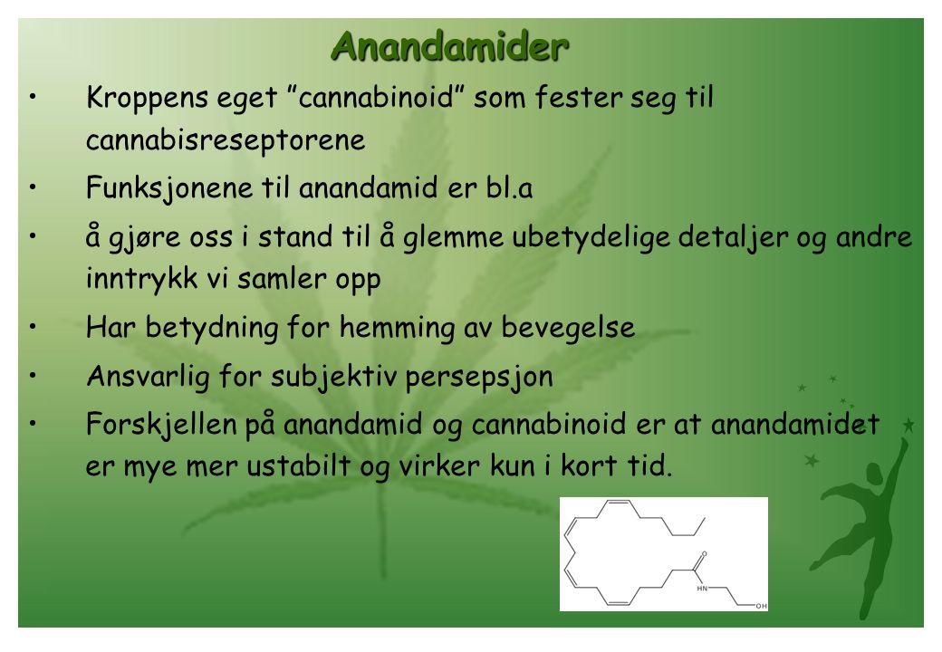 """Anandamider •Kroppens eget """"cannabinoid"""" som fester seg til cannabisreseptorene •Funksjonene til anandamid er bl.a •å gjøre oss i stand til å glemme u"""