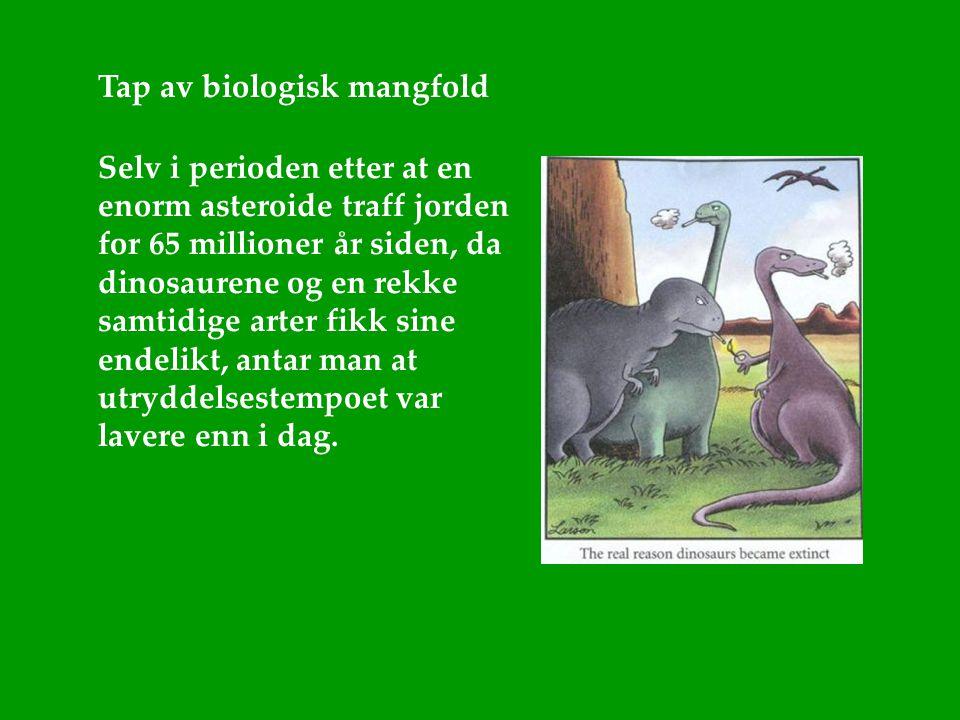 Tap av biologisk mangfold Selv i perioden etter at en enorm asteroide traff jorden for 65 millioner år siden, da dinosaurene og en rekke samtidige art